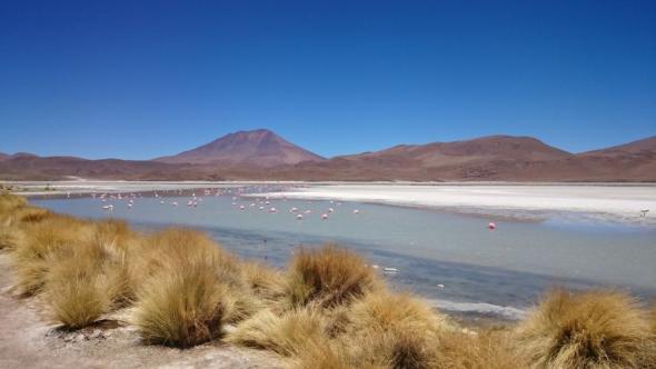 Wilde Flamingos in einem der vielen Seen der bolivischen Wüste