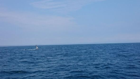 Die Flosse eines Buckelwals nahe der Isla de la Plata